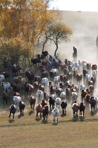 iPhone Wallpaper Bashang, many horses, grassland, trees, China