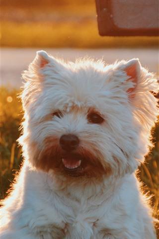 iPhone Wallpaper Furry white dog, sunshine, bench