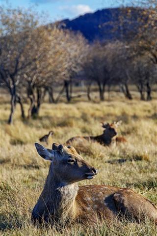 iPhone Wallpaper Grassland, trees, deers, wildlife