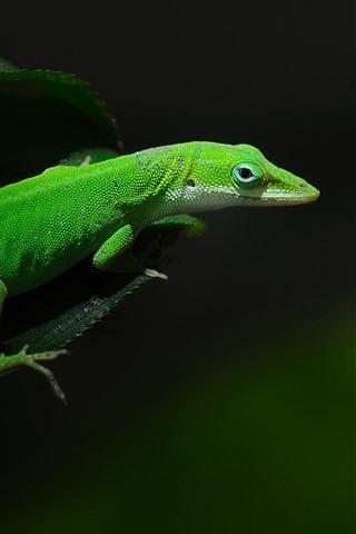 iPhone Wallpaper Green lizard, black background