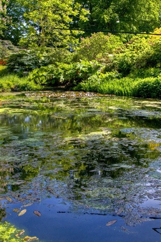 iPhone Wallpaper Pond, trees, park, summer