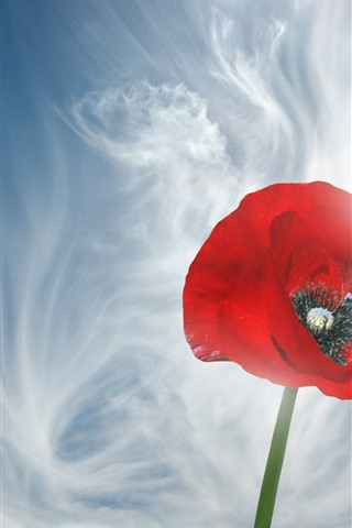iPhone Wallpaper Red poppy flower close-up, sky, white clouds