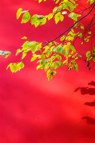 iPhone Wallpaper Red wall, green foliages, twigs
