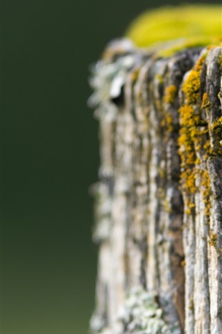 iPhone Wallpaper Stump close-up, moss