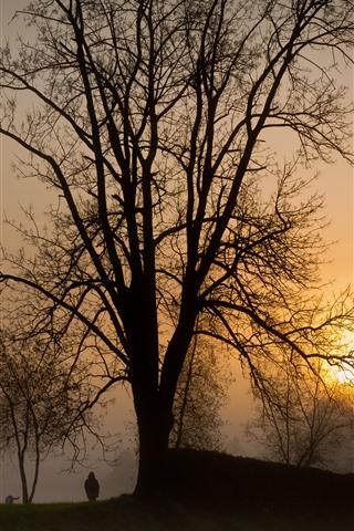 iPhone Wallpaper Trees, sunset, child, dog, fog, silhouette