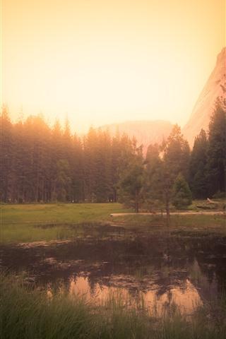 iPhone Wallpaper Yosemite, California, USA, trees, fog, morning, sunrise