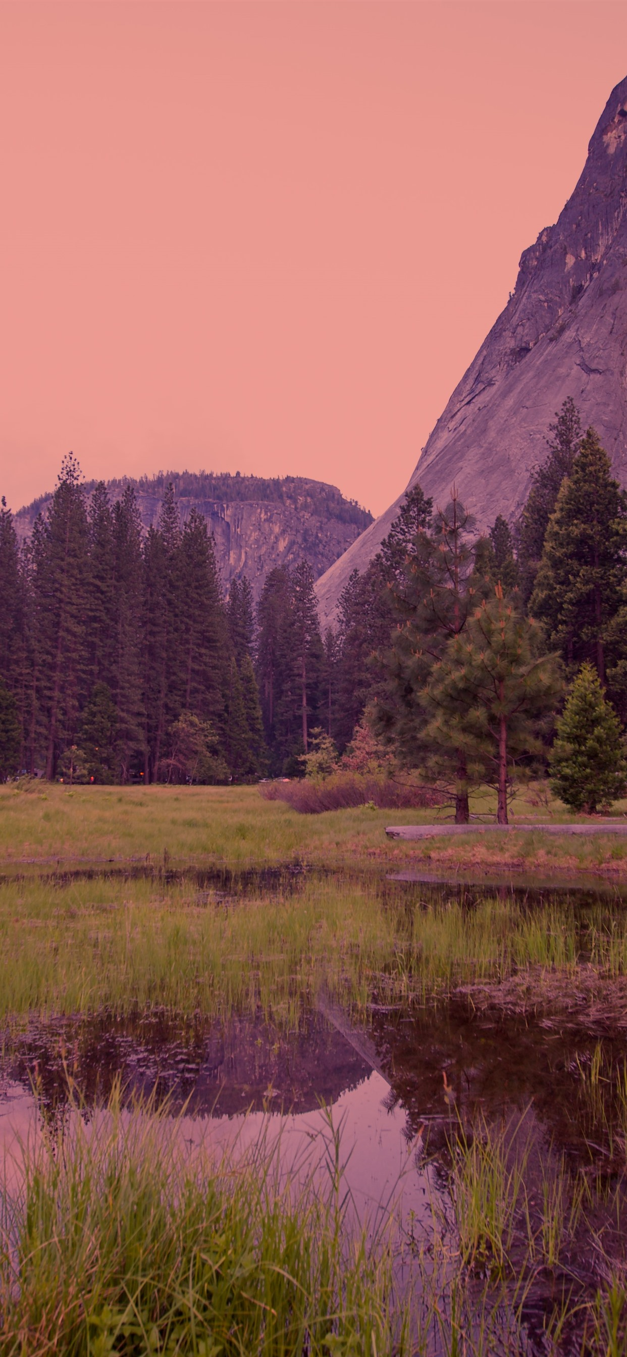 Yosemite National Park Forest Dusk Fog 1242x2688 Iphone 11 Pro Xs Max Wallpaper Background Picture Image