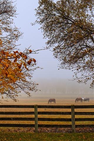 iPhone Wallpaper Autumn, horses, fence, trees, fog, morning