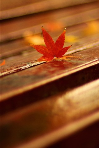 iPhone Wallpaper Bench, red maple leaves, hazy