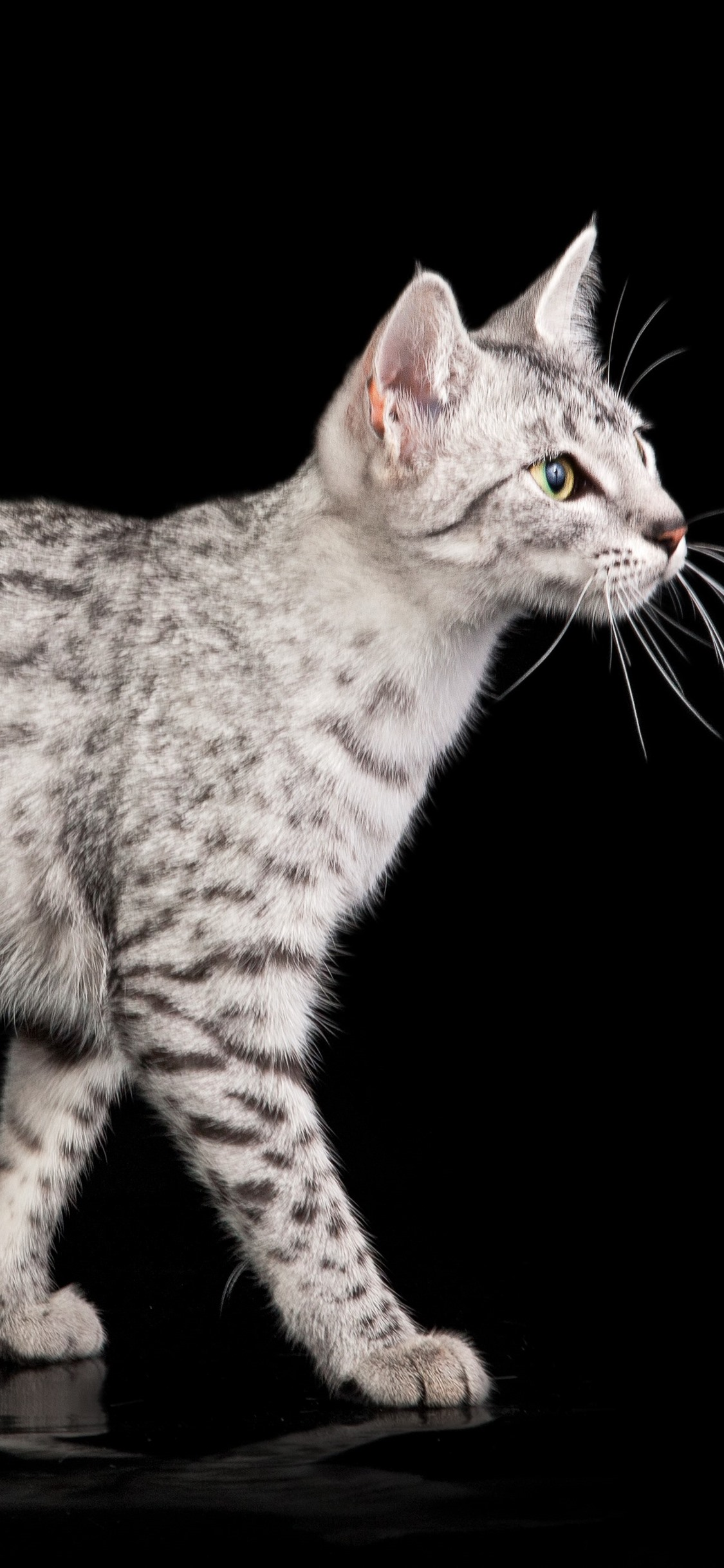 Cat Spot Black Background 1125x2436 Iphone 11 Pro Xs X Wallpaper Background Picture Image