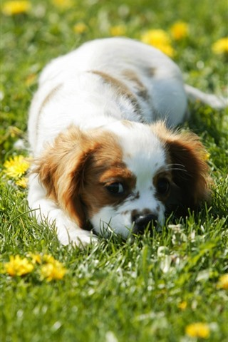 iPhone Wallpaper Cute puppy sleep in grass, yellow flowers