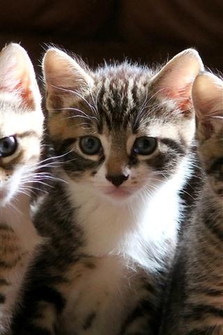iPhone Wallpaper Cute three kittens, look