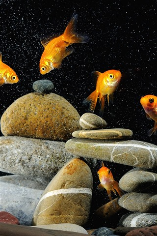 iPhone Wallpaper Goldfish, stones, water bubbles