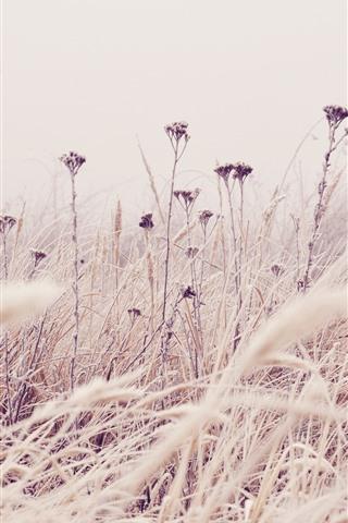 iPhone Wallpaper Grass, wildflowers