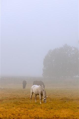 iPhone Wallpaper Morning, fog, some horses, grass