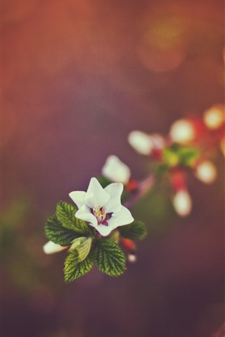 iPhone Wallpaper One little flower, hazy background