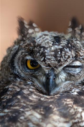 iPhone Wallpaper Owl, one eye open, one eye closed, sleep