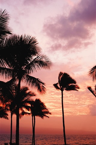 iPhone Wallpaper Palm trees, sunset, sea, red sky