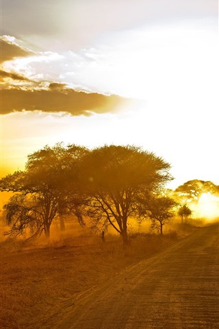 iPhone Wallpaper Africa, trees, road, sunset