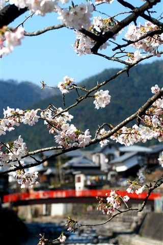 iPhone Wallpaper Countryside, sakura bloom