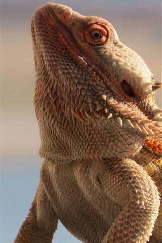 iPhone Wallpaper Dragon lizard, scales