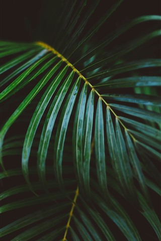 iPhone Wallpaper Palm leaves, darkness
