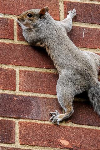 iPhone Wallpaper Squirrel climbing wall