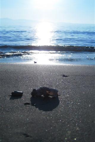 iPhone Wallpaper Beach, sea, people, sun
