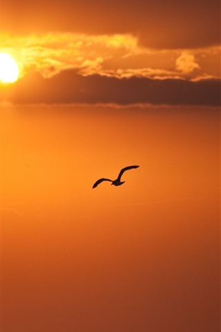 iPhone Wallpaper Bird flying in sky, sunset, clouds