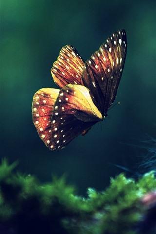 iPhone Wallpaper Butterfly flying, green grass