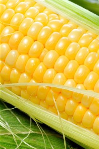 iPhone Wallpaper Corn, vegetable, grain