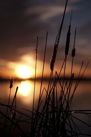 iPhone Wallpaper Grass, reeds, lake, sunset