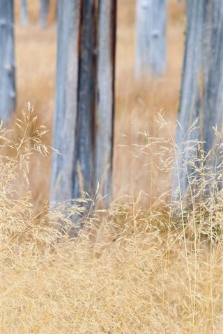 iPhone Wallpaper Grass, trunk, autumn