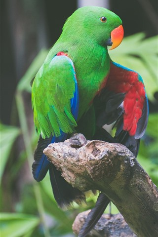iPhone Wallpaper Green feather parrot, bird, colorful