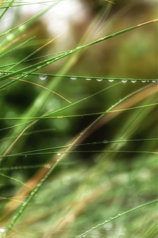 iPhone Wallpaper Green grass, dew, hazy, summer