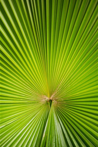 iPhone Wallpaper Green palm tree leaf, sector