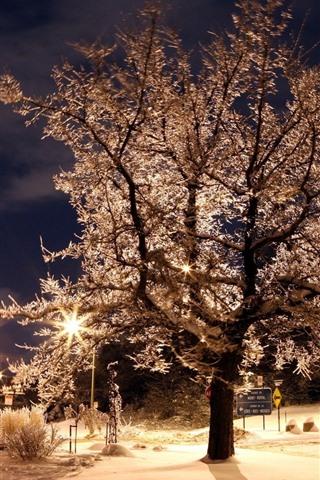 iPhone Wallpaper Night, trees, park, lights, backlight, glare