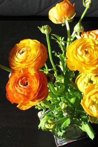iPhone Wallpaper Orange and yellow peonies, flowers, bouquet