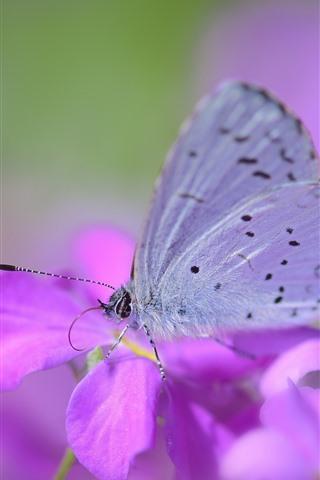iPhone Wallpaper Pink flowers, butterfly, wings