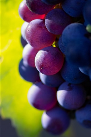 iPhone Wallpaper Purple grapes, delicious fruit