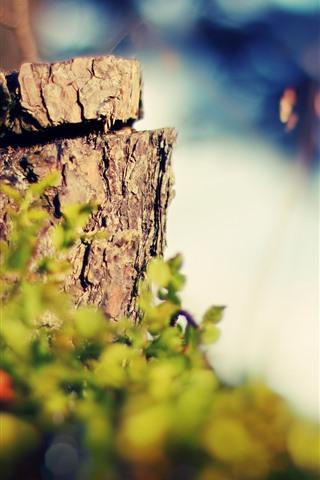 iPhone Wallpaper Stump, bushes, hazy