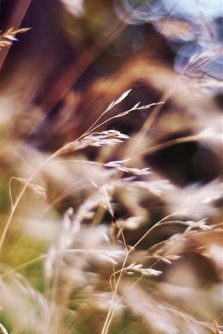 iPhone Wallpaper Summer, grass, hazy