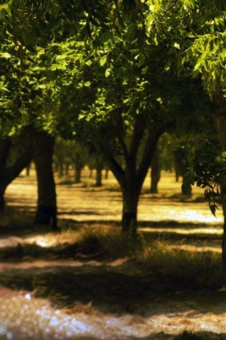 iPhone Wallpaper Trees, summer, shadow, sunlight