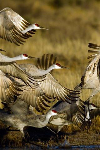 iPhone Wallpaper Wildlife, birds flight, swamp