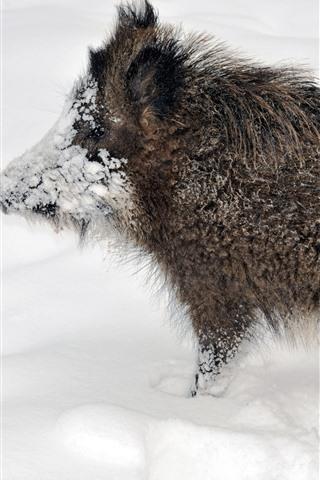 iPhone Wallpaper Wildlife, boar, snow, winter