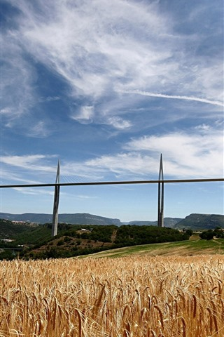 iPhone Wallpaper Bridge, wheat field