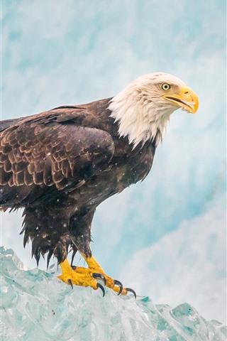 iPhone Wallpaper Eagle, ice, beak