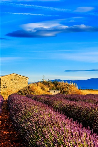 iPhone Wallpaper France, Provence, lavender flowers field, tree, blue sky