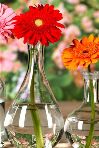 iPhone Wallpaper Gerbera, flowers, orange, yellow, red, glass bottles