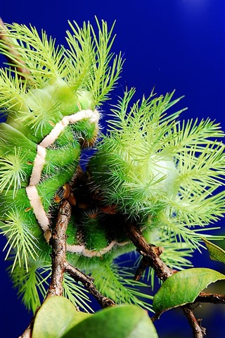 iPhone Wallpaper Green plants close-up, needles